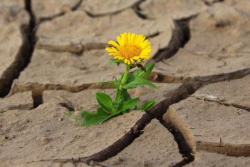 Flor saliendo de una tierra árida y seca.